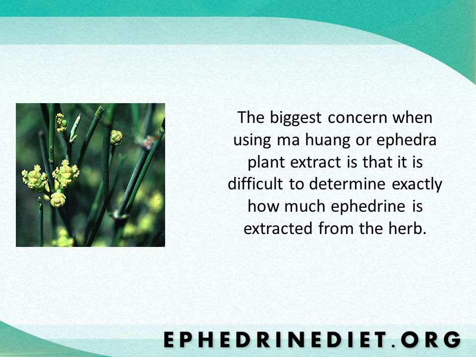 The biggest concern when using ma huang or ephedra plant extract is that it is difficult to determine exactly how much ephedrine is extracted from the herb.