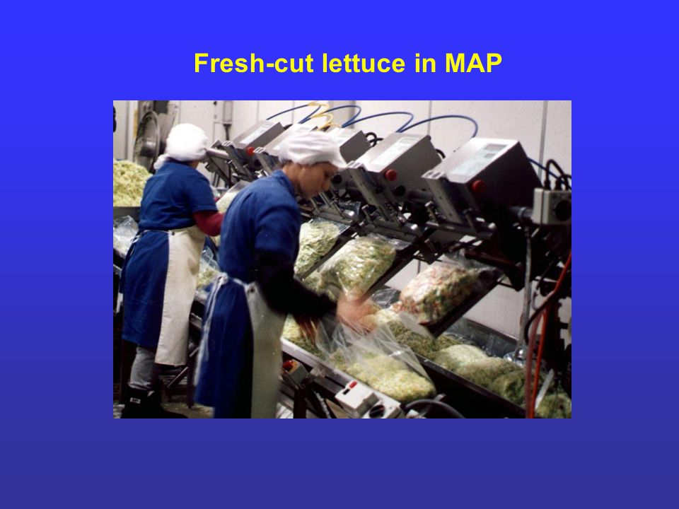 Fresh-cut lettuce in MAP