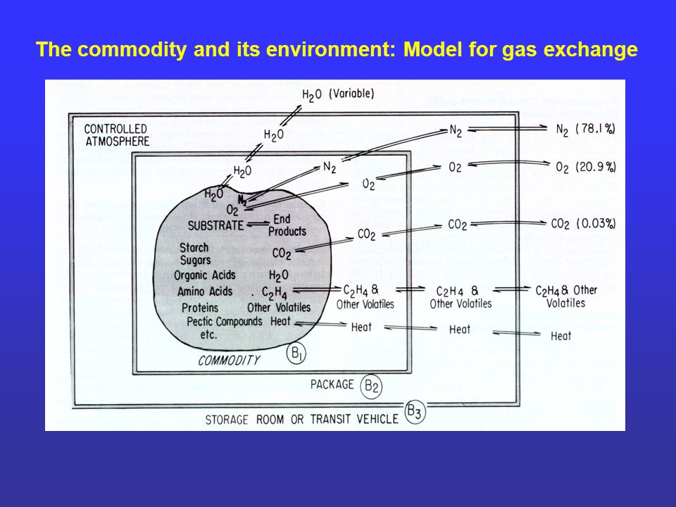 The commodity and its environment: Model for gas exchange