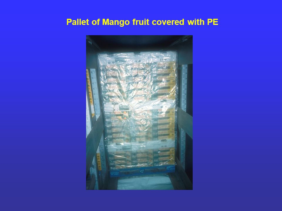 Pallet of Mango fruit covered with PE