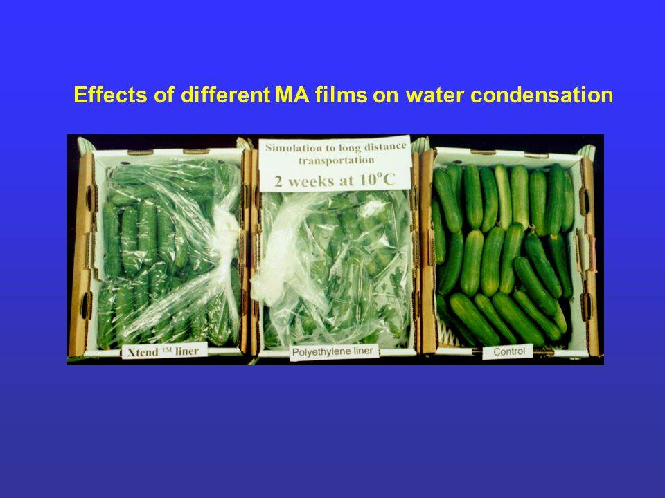 Effects of different MA films on water condensation