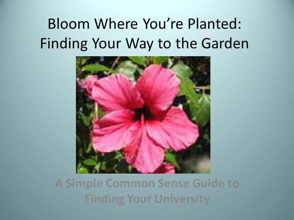 Bloom Where You're Planted: Finding Your Way to the Garden
