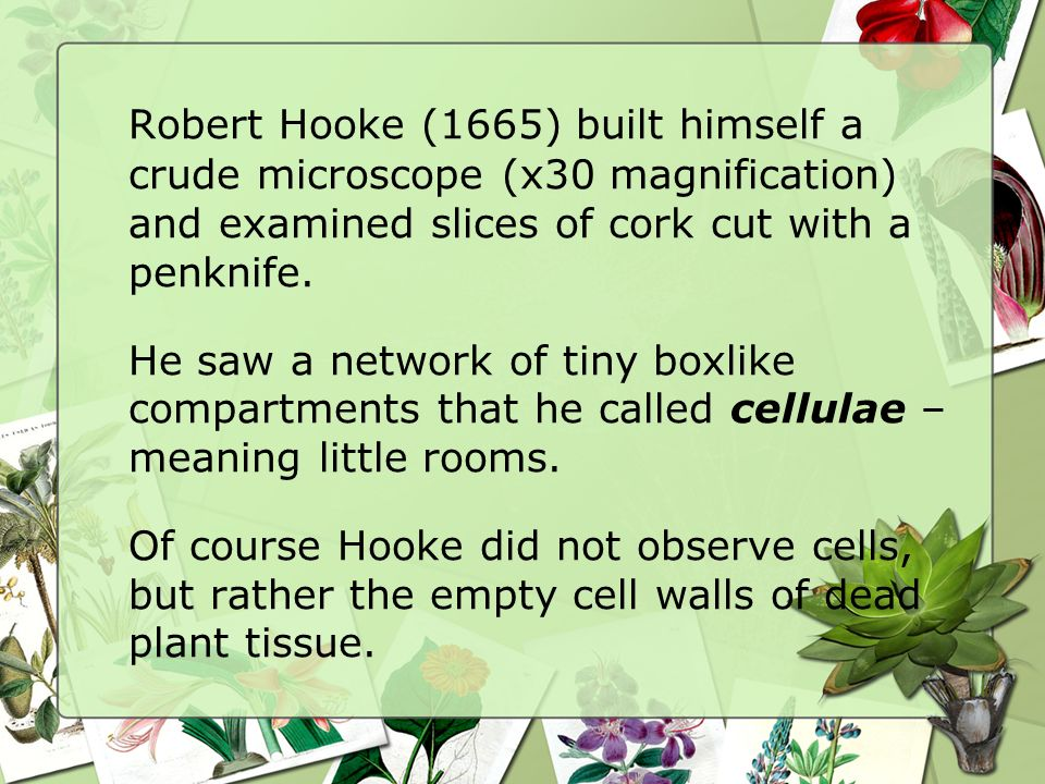 Robert Hooke (1665) built himself a crude microscope (x30 magnification) and examined slices of cork cut with a penknife.