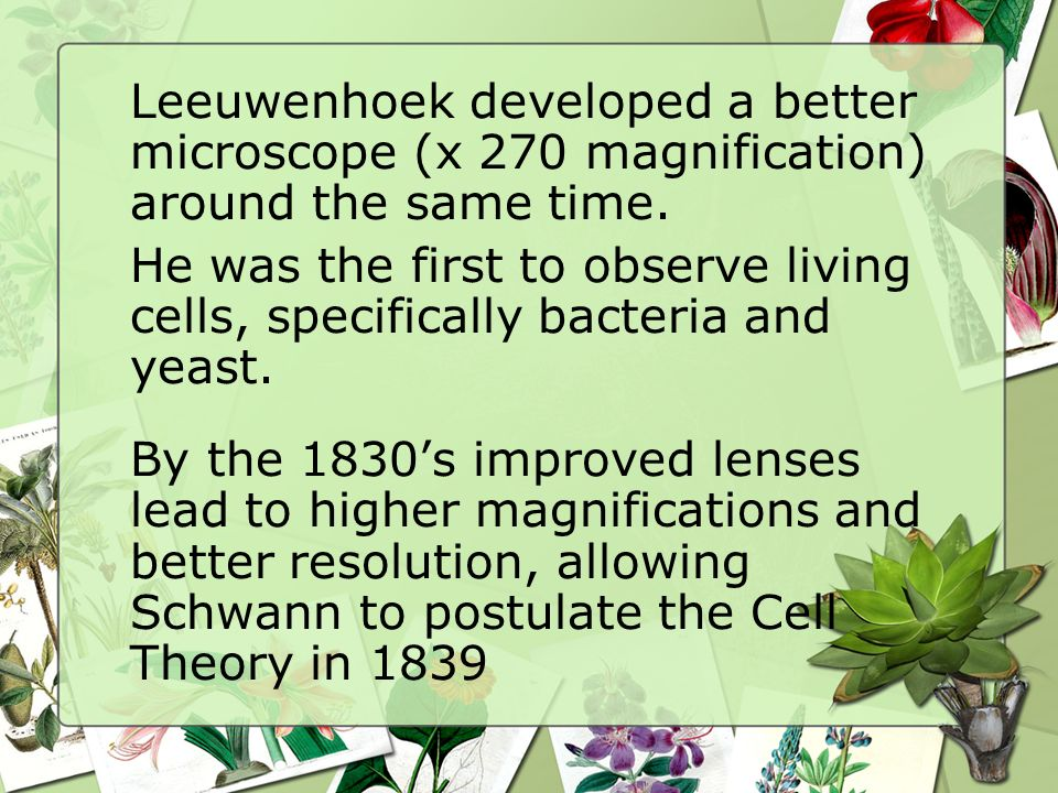Leeuwenhoek developed a better microscope (x 270 magnification) around the same time.