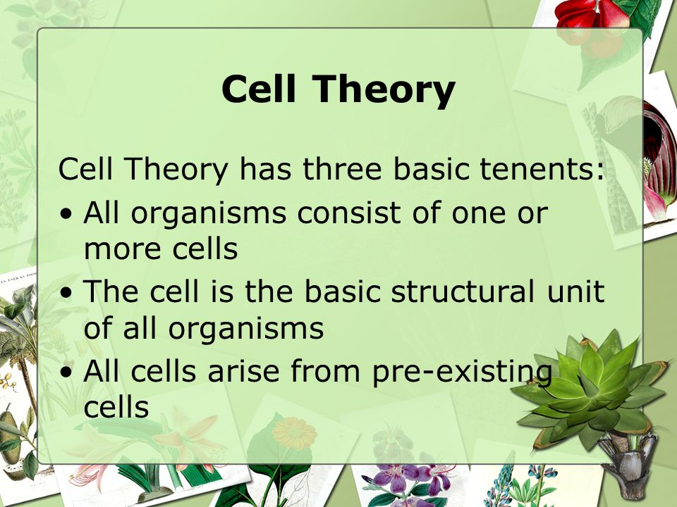 Cell Theory Cell Theory has three basic tenents: