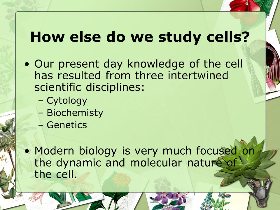 How else do we study cells