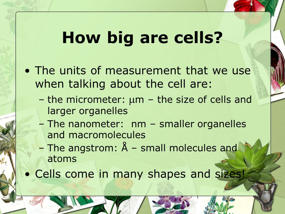 How big are cells The units of measurement that we use when talking about the cell are: