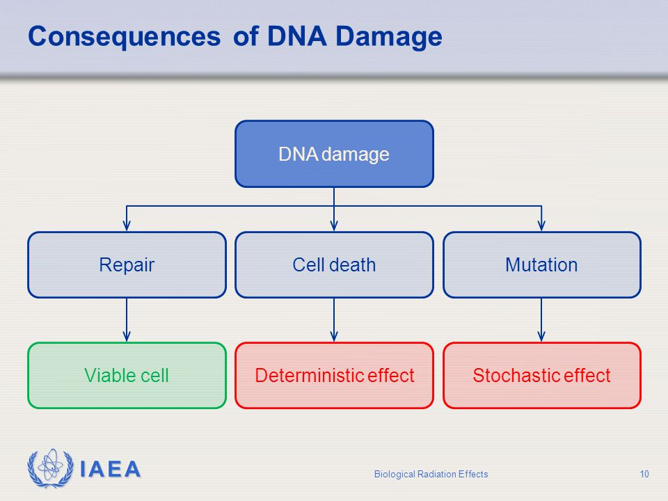 Consequences of DNA Damage