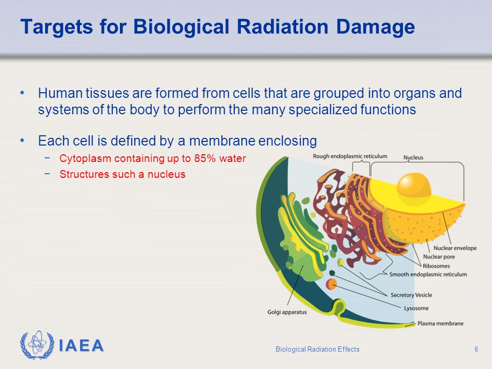 Targets for Biological Radiation Damage