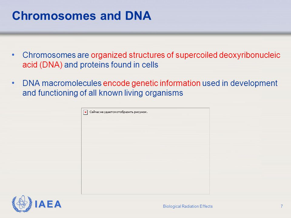Chromosomes and DNA Chromosomes are organized structures of supercoiled deoxyribonucleic acid (DNA) and proteins found in cells.