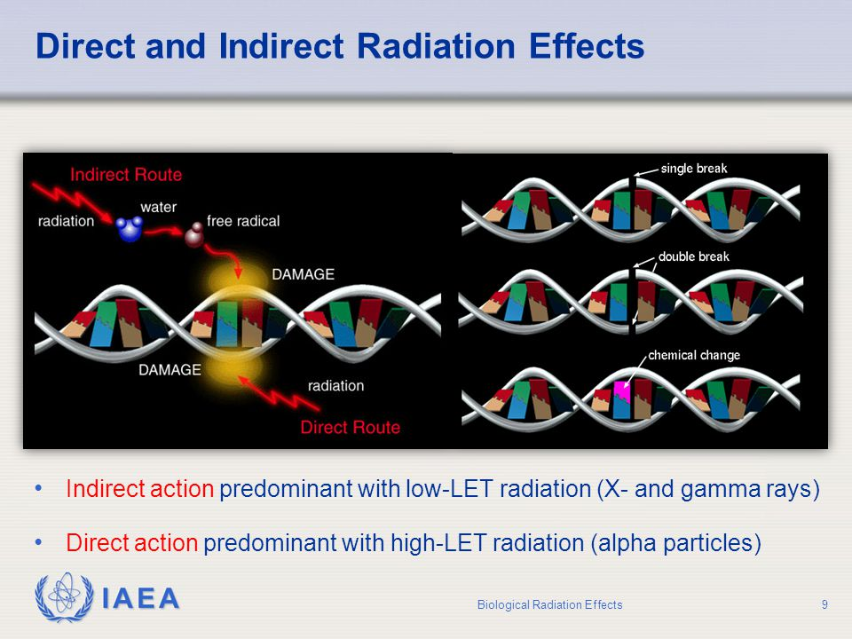 Direct and Indirect Radiation Effects