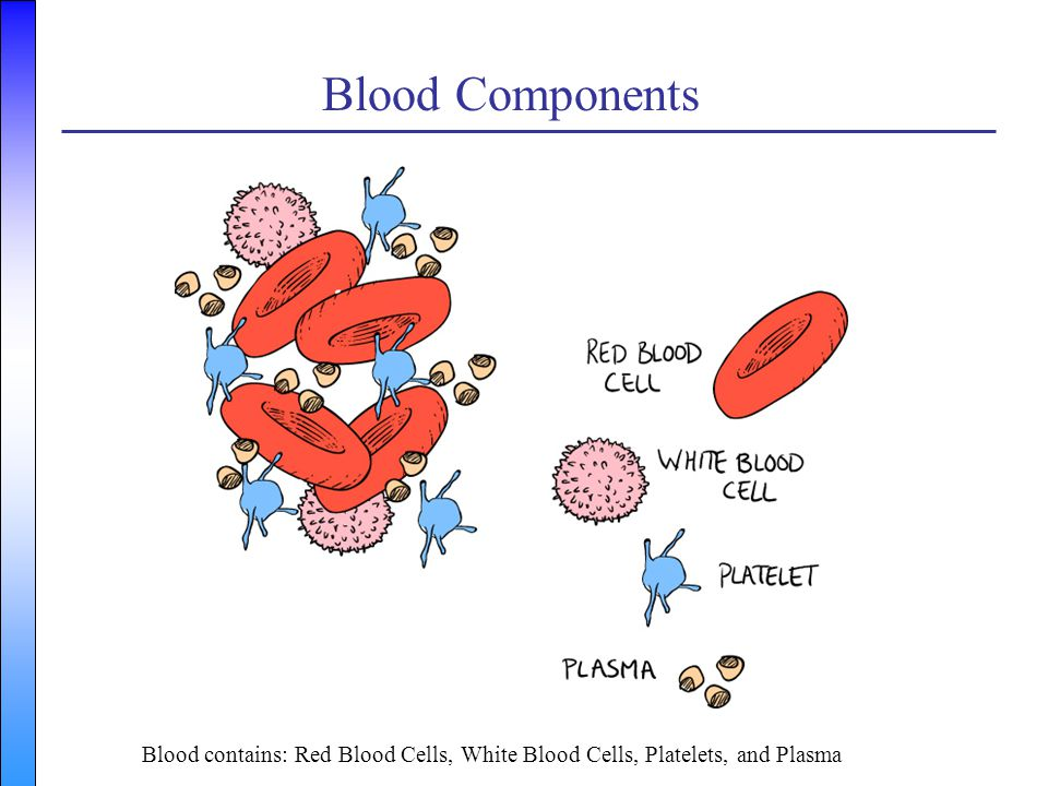 Blood Components Blood contains: Red Blood Cells, White Blood Cells, Platelets, and Plasma