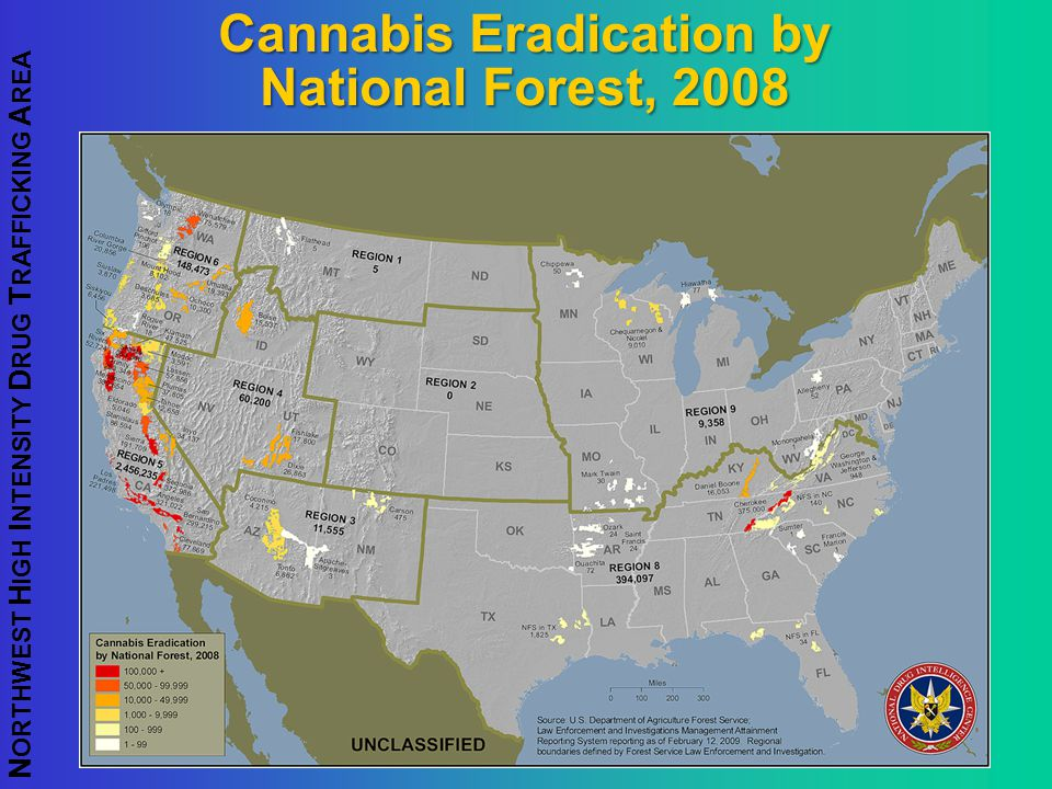 Cannabis Eradication by National Forest, 2008