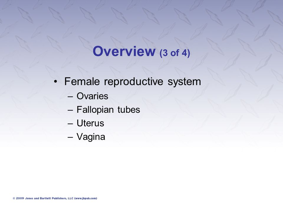 Overview (3 of 4) Female reproductive system Ovaries Fallopian tubes