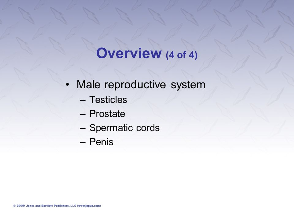 Overview (4 of 4) Male reproductive system Testicles Prostate