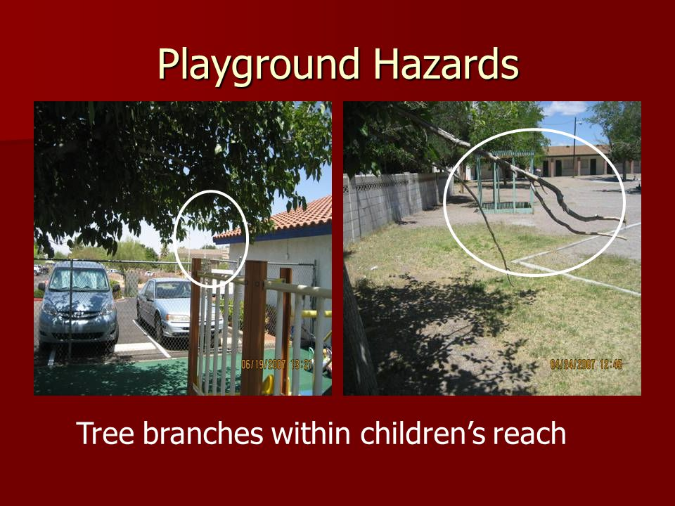 Tree branches within children's reach