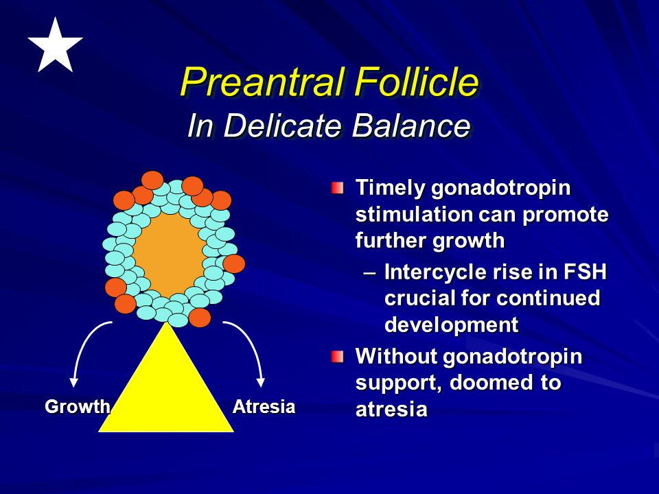 Preantral Follicle In Delicate Balance
