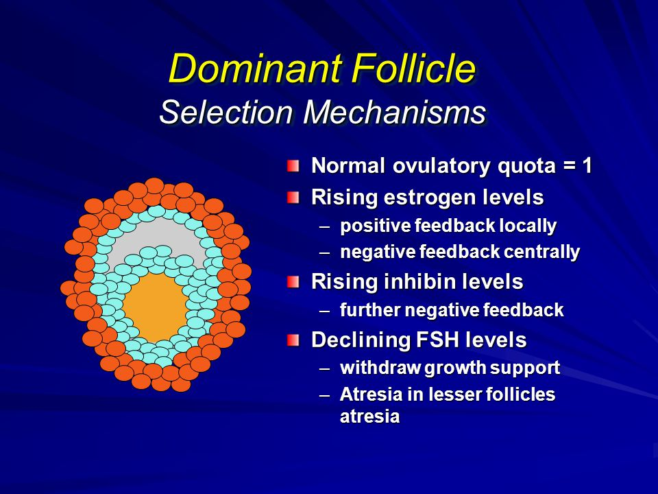 Dominant Follicle Selection Mechanisms
