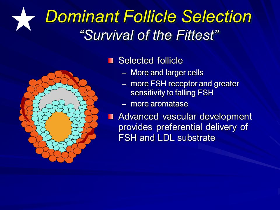 Dominant Follicle Selection Survival of the Fittest