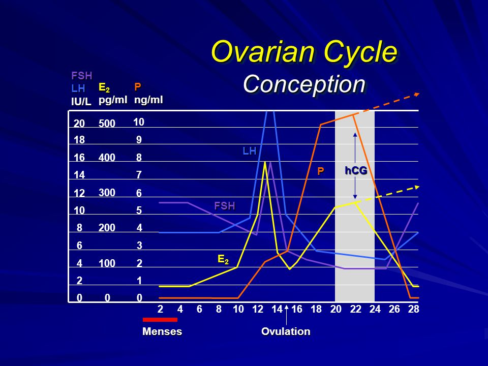 Ovarian Cycle Conception