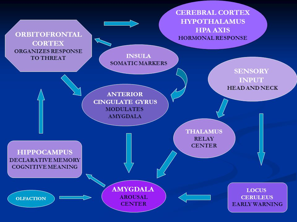 CEREBRAL CORTEX HYPOTHALAMUS HPA AXIS ORBITOFRONTAL CORTEX SENSORY