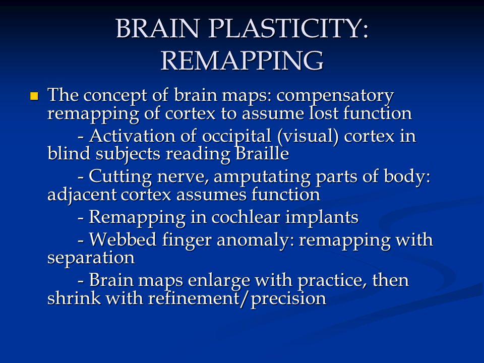 BRAIN PLASTICITY: REMAPPING