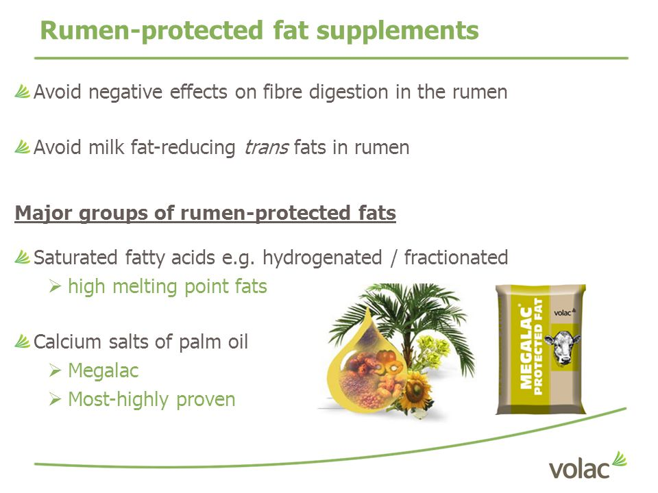 Rumen-protected fat supplements