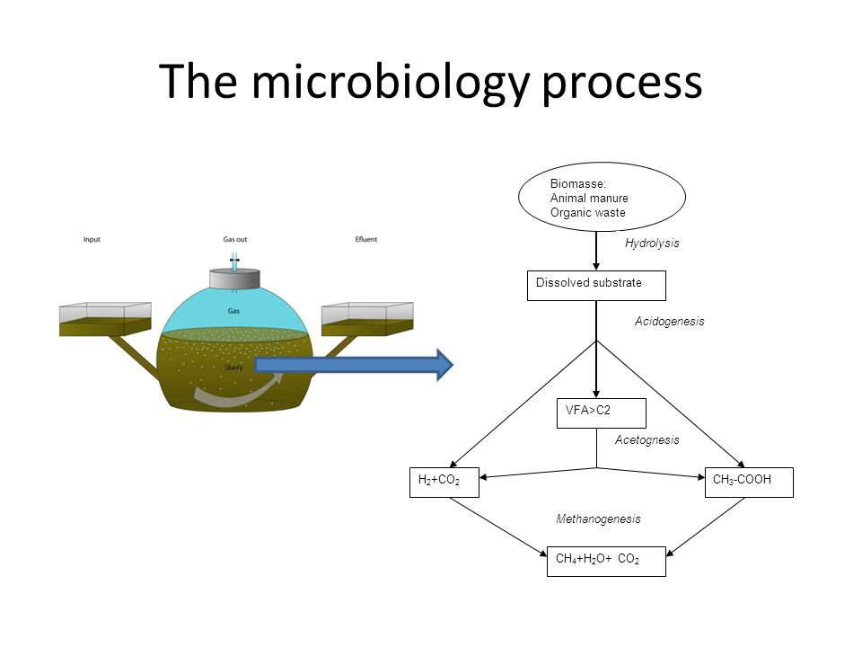 The microbiology process