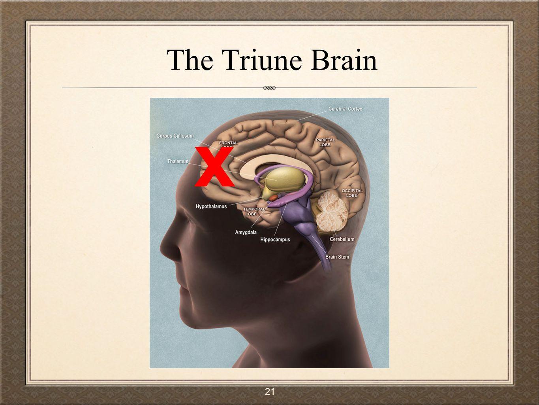 The Triune Brain x