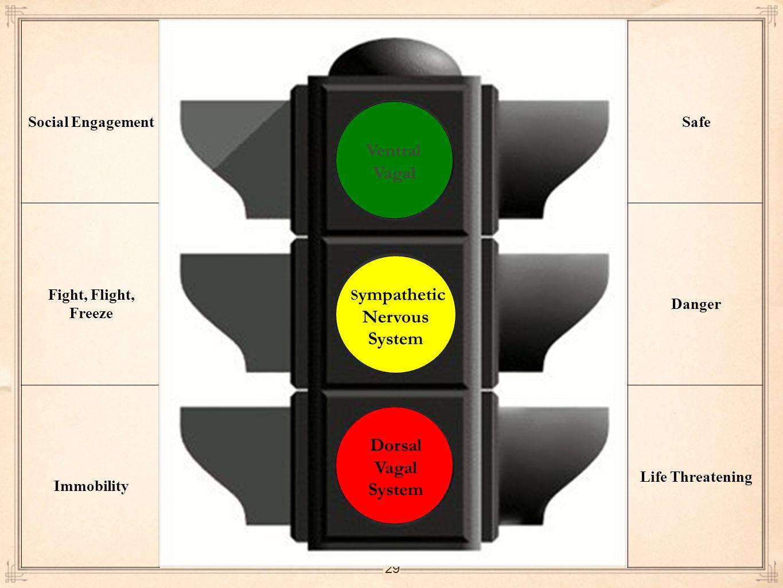 Vagal Sympathetic Nervous System Dorsal Vagal System