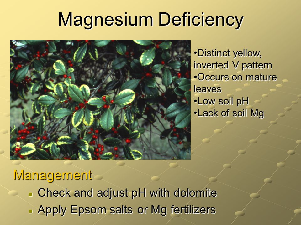 Magnesium Deficiency Management Check and adjust pH with dolomite