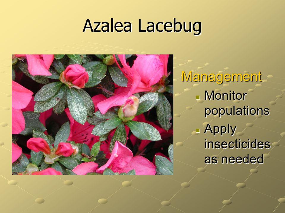 Azalea Lacebug Management Monitor populations