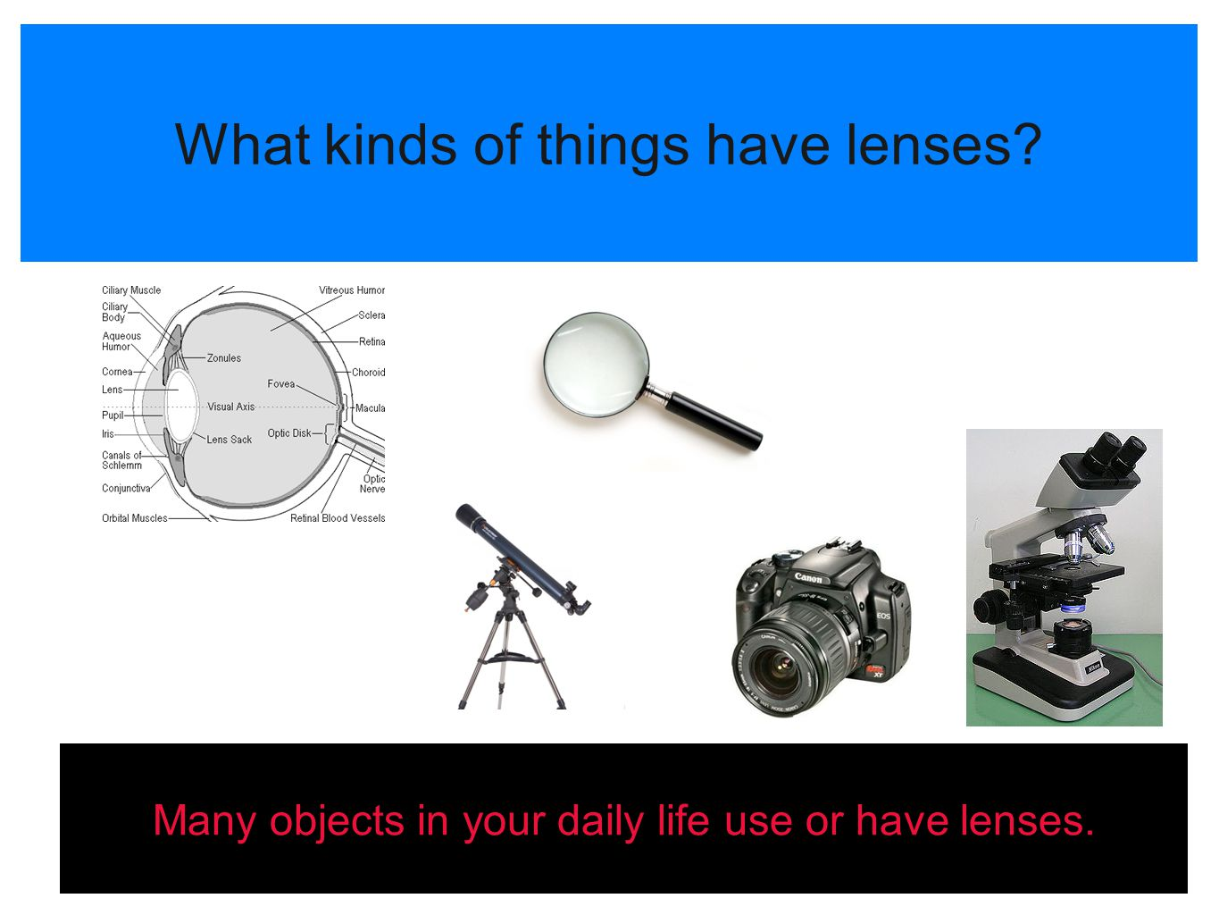 What kinds of things have lenses