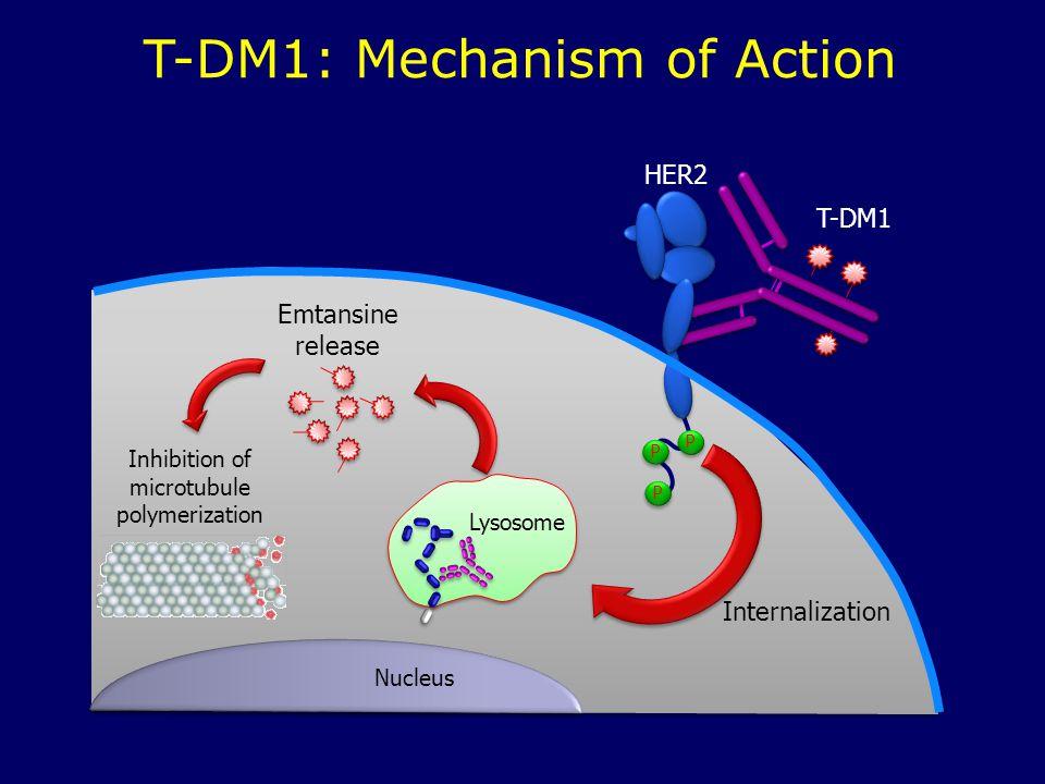 T-DM1: Mechanism of Action