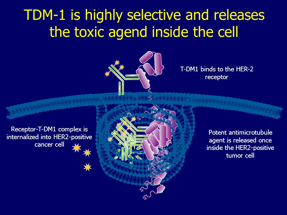 TDM-1 is highly selective and releases the toxic agend inside the cell