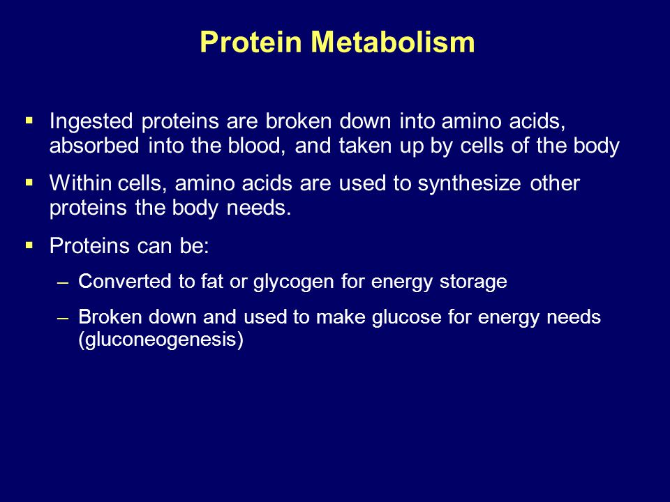 Protein Metabolism Ingested proteins are broken down into amino acids, absorbed into the blood, and taken up by cells of the body.