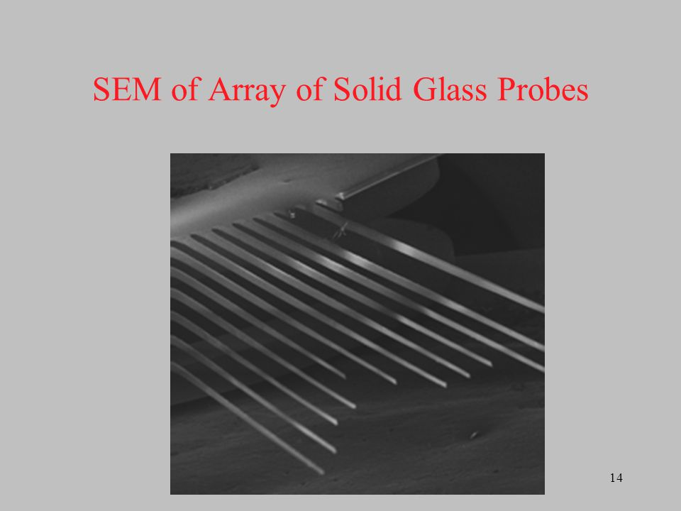 SEM of Array of Solid Glass Probes