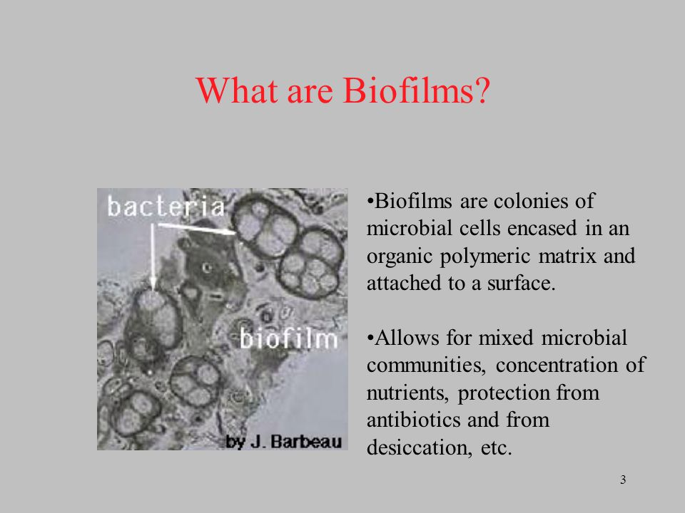 What are Biofilms Biofilms are colonies of microbial cells encased in an organic polymeric matrix and attached to a surface.