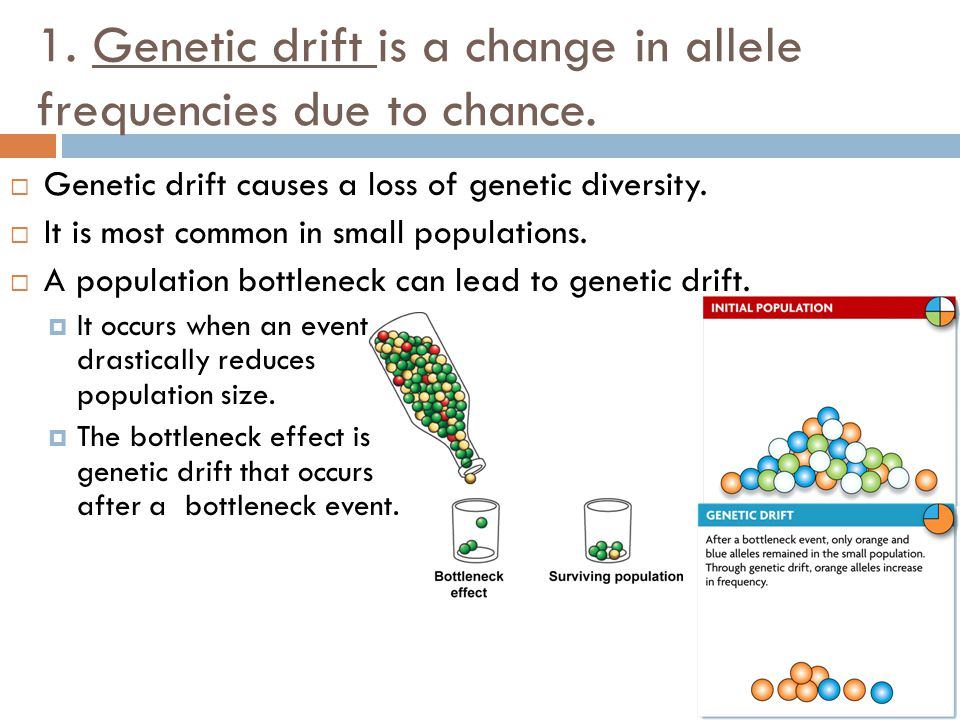 1. Genetic drift is a change in allele frequencies due to chance.