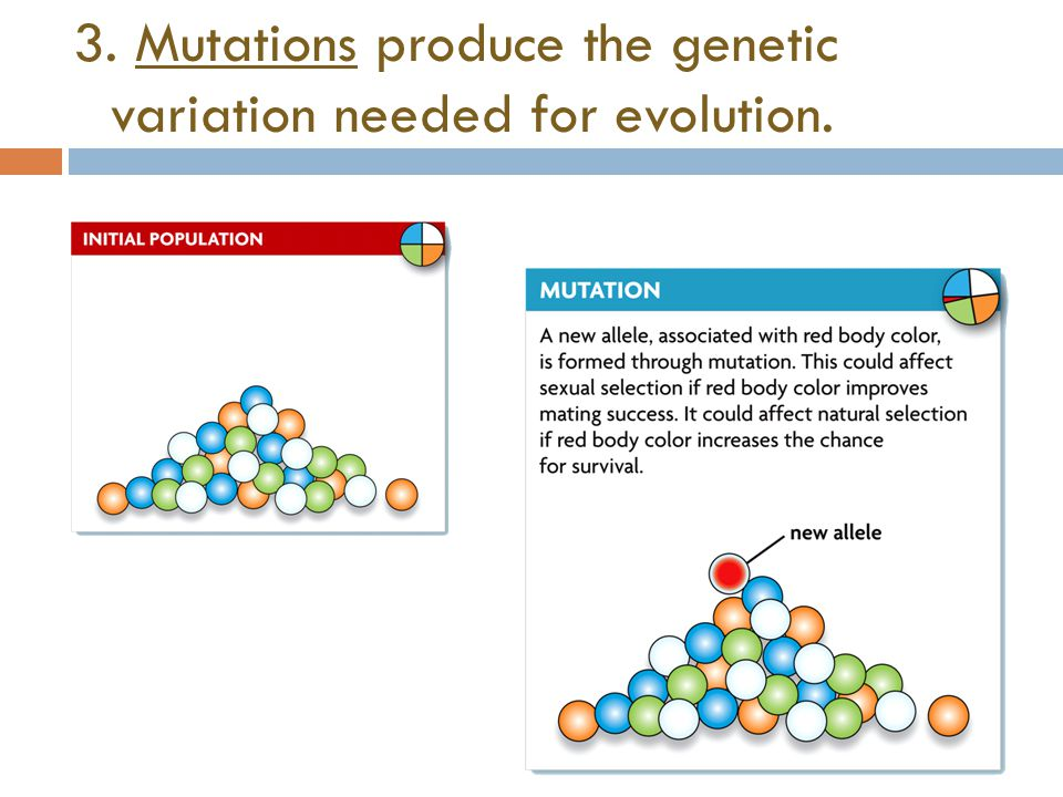 3. Mutations produce the genetic variation needed for evolution.