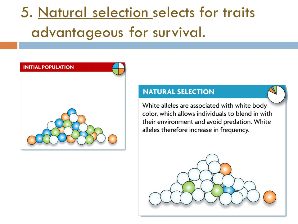 5. Natural selection selects for traits advantageous for survival.