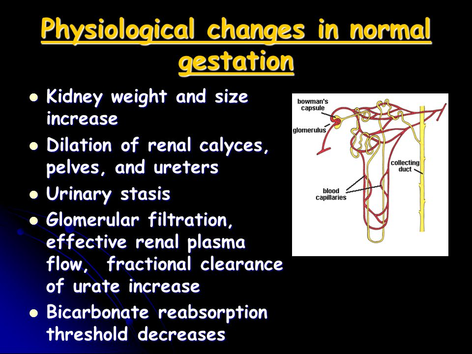 Physiological changes in normal gestation