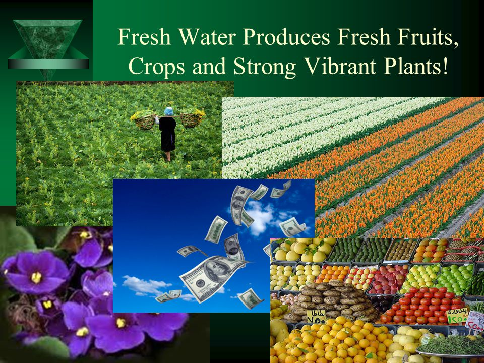 Fresh Water Produces Fresh Fruits, Crops and Strong Vibrant Plants!