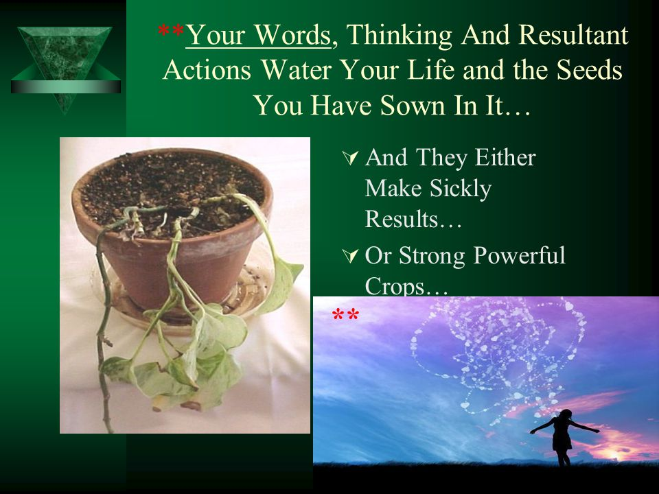 **Your Words, Thinking And Resultant Actions Water Your Life and the Seeds You Have Sown In It…