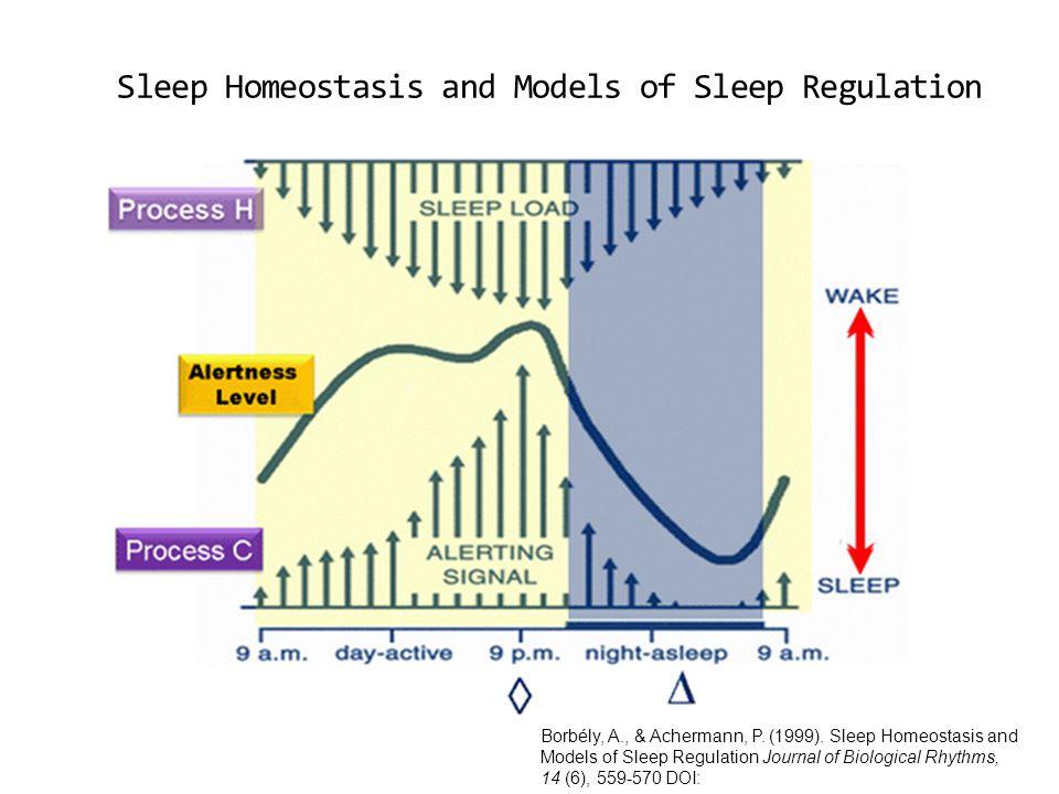 Sleep Homeostasis and Models of Sleep Regulation
