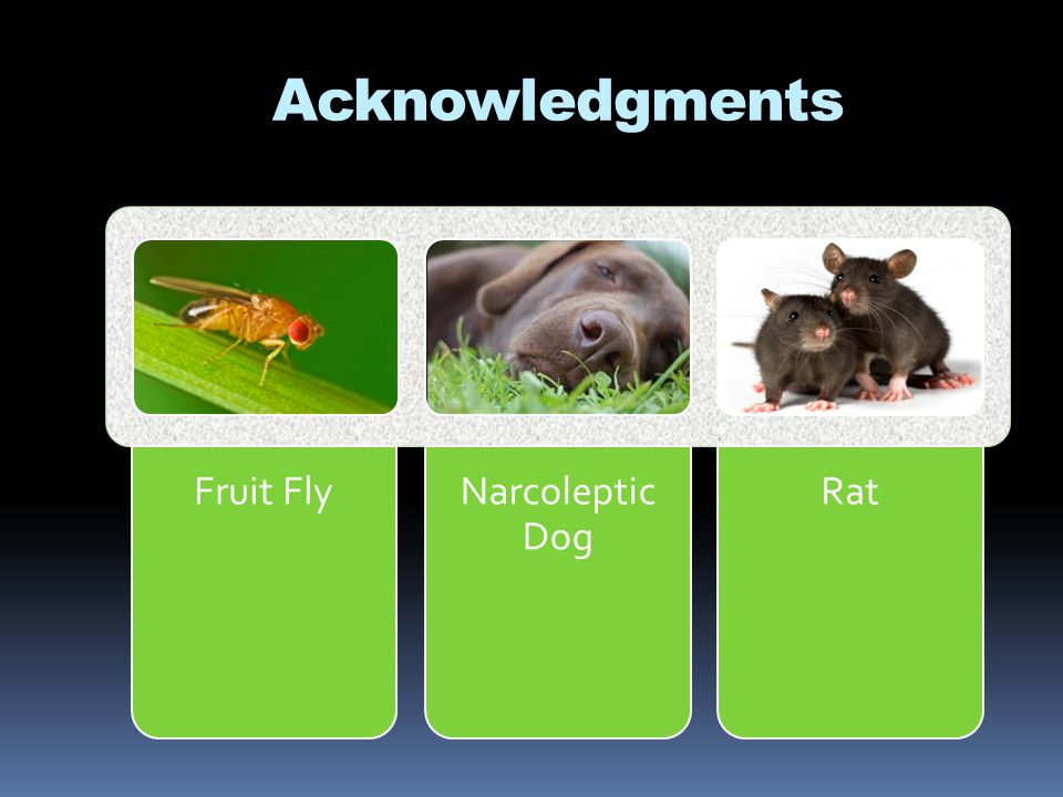Acknowledgments Fruit Fly Narcoleptic Dog Rat