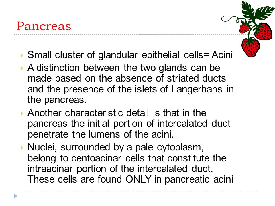 Pancreas Small cluster of glandular epithelial cells= Acini
