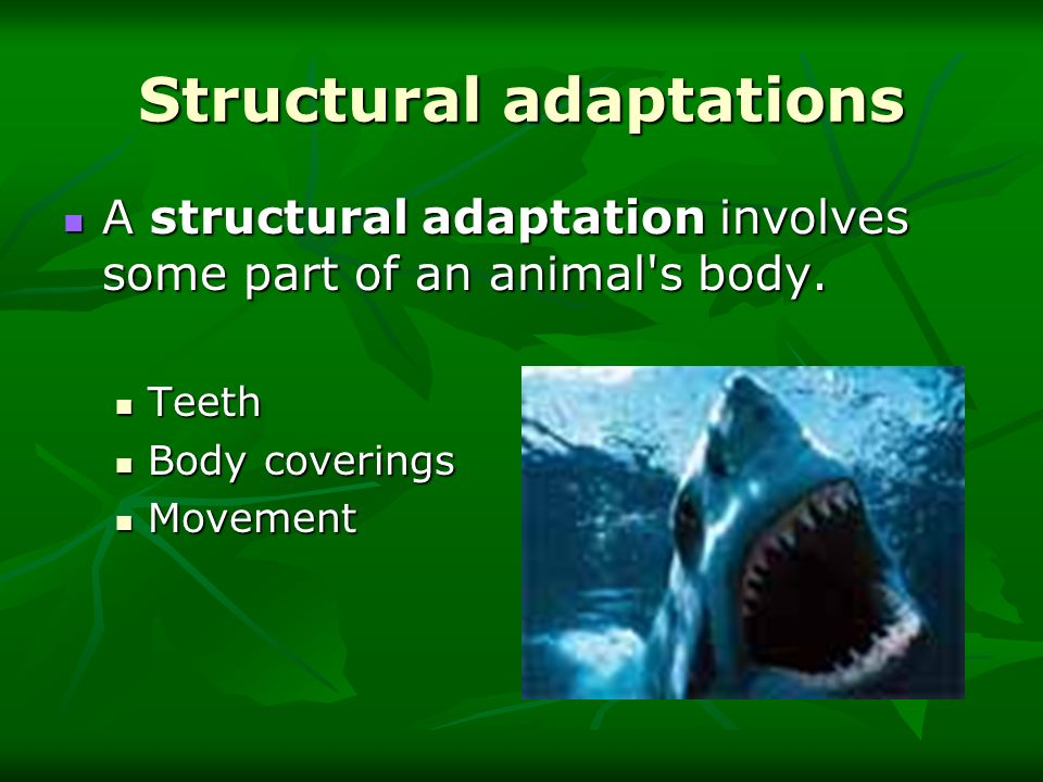 Structural adaptations