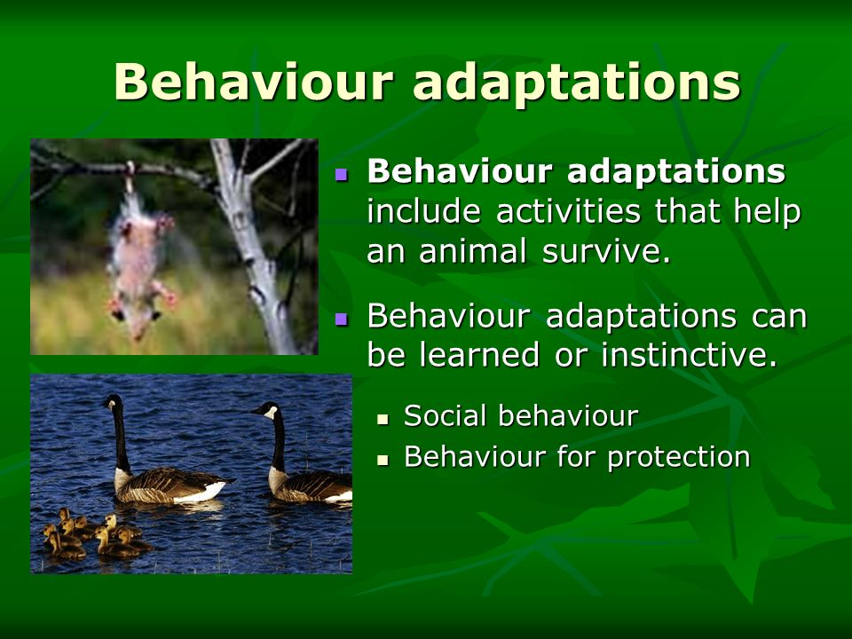 Behaviour adaptations
