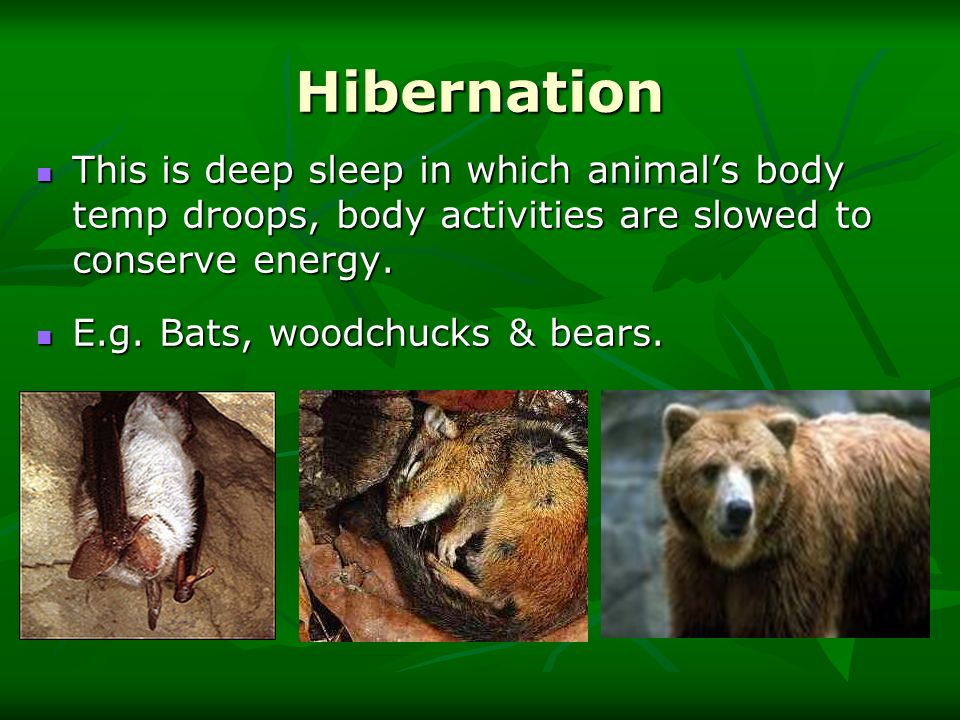 Hibernation This is deep sleep in which animal's body temp droops, body activities are slowed to conserve energy.
